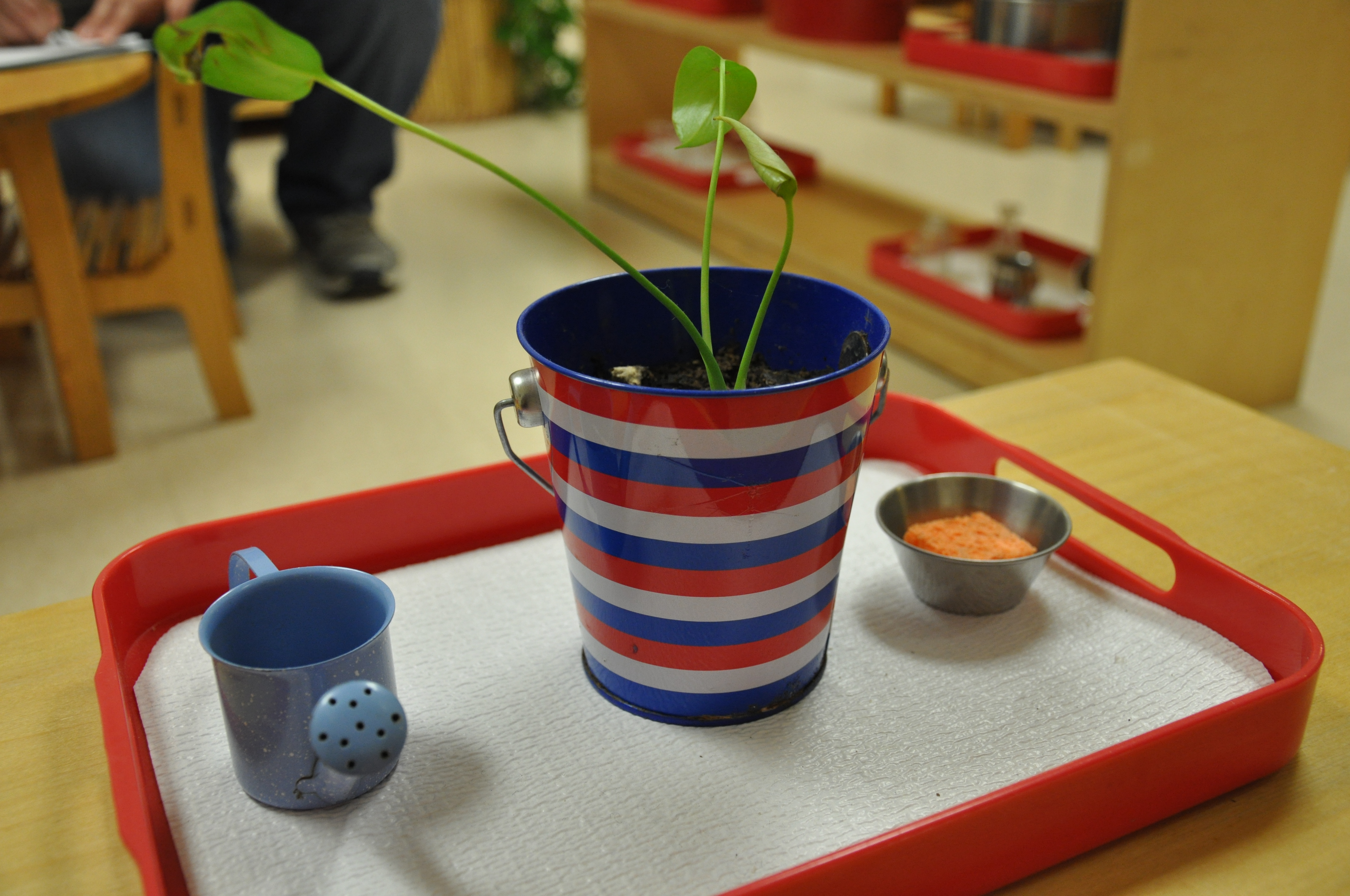 A Montessori Classroom has work at the child's level,easy for them to take and replace. They learn to maintain their own environment.